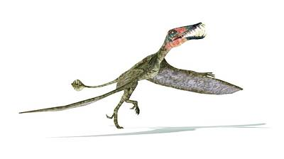 Triassic Photograph - Dorygnathus Dinosaur by Leonello Calvetti