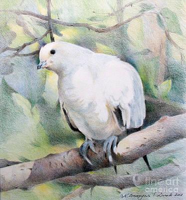 Drawing - Dove by Natalia Eremeyeva Duarte