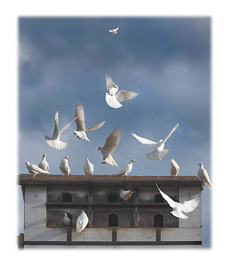 Wall Art - Photograph - Doves by Mal Bray
