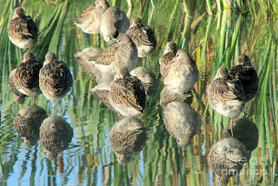 Photograph - Dowitcher Mosaic by Frank Townsley