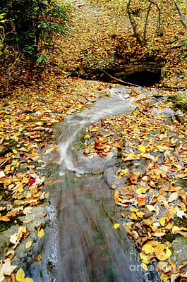 Photograph - Down Stream by Debra Crank
