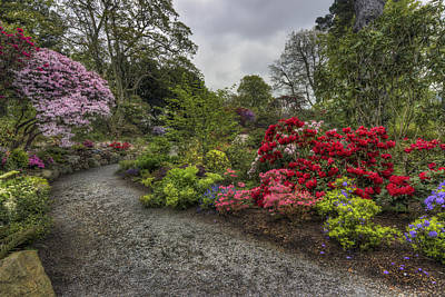 Photograph - Down The Garden Path by Ian Mitchell