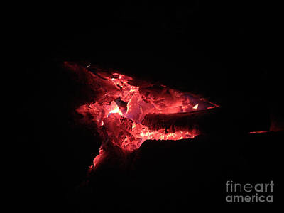 Photograph - Dragon by Melissa Lightner