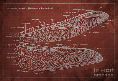 Dragonfly Wings Digital Art - Dragonfly Wings Venation Blueprint by Pablo Franchi
