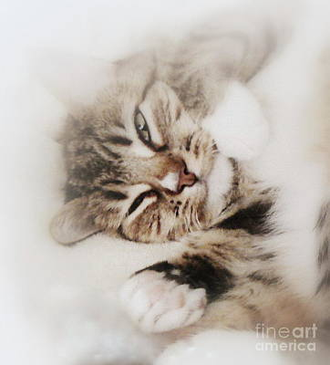 Photograph - Dreamy Cat Awakens by Diana Besser