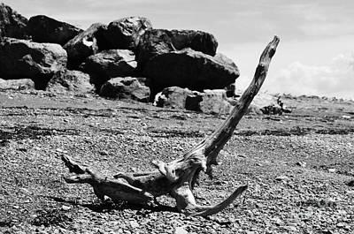 Photograph - Driftwood Animal by Randi Grace Nilsberg