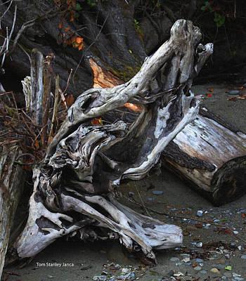 Driftwood On The Beach Art Print by Tom Janca