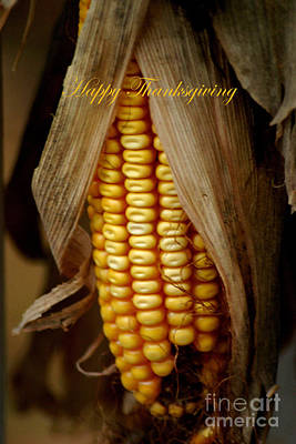 Photograph - Dry Corn Husk by Living Color Photography Lorraine Lynch