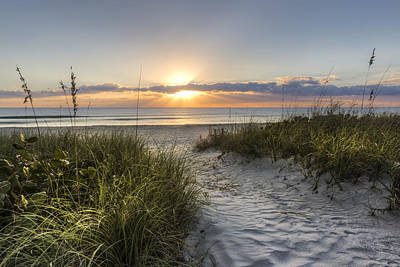 Delray Photograph - Dune Trail by Debra and Dave Vanderlaan