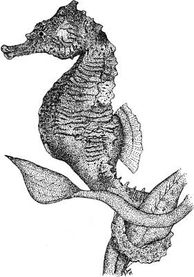 Dwarf Seahorse Art Print by Roger Hall