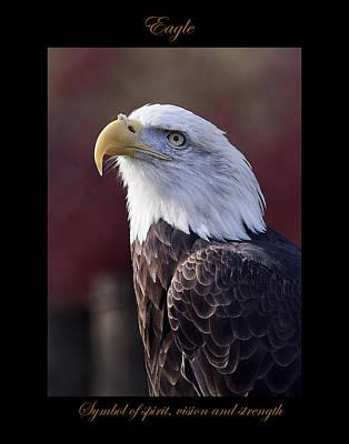 Photograph - Eagle by Marty Maynard