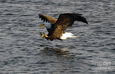 Mississippi River Photograph - Eagles by Robert Smice