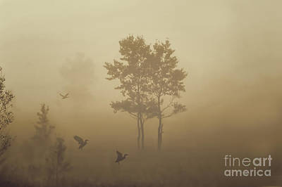Early Morning Canaan Valley Art Print by Dan Friend