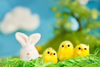 Mythja Digital Art - Easter Chicks by Mythja  Photography