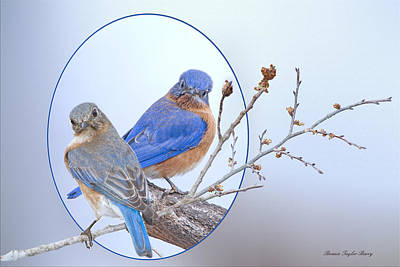 Bluebird Of Happiness Photograph - Eastern Bluebird Pair by Bonnie Barry