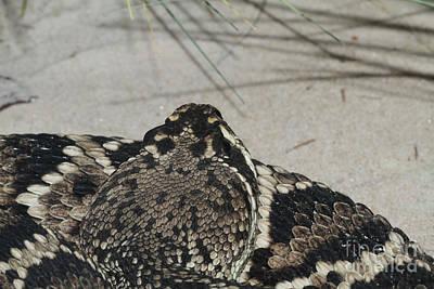 Close-up Photograph - Eastern Diamondback Rattlesnake #2 by Judy Whitton