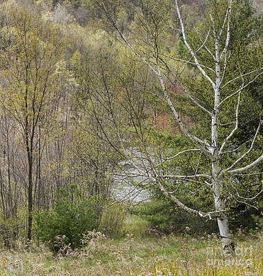 Easton Mountain Trees And Pond Art Print by John Arnaldi