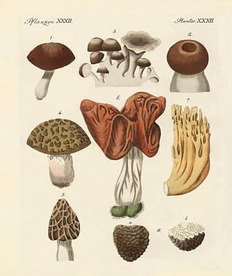 Tr Drawing - Eatable Mushrooms by Splendid Art Prints
