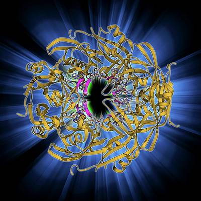 Ebola Matrix Protein Molecule Art Print by Laguna Design