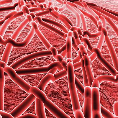 Ebola Virus Art Print
