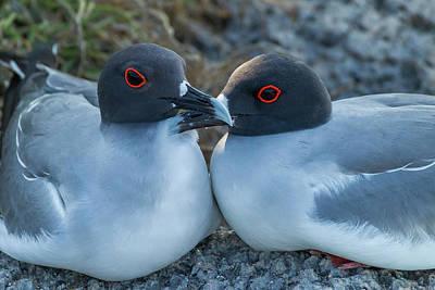 Swallow Photograph - Ecuador, Galapagos National Park by Jaynes Gallery