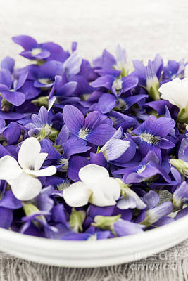 Edible Violets In Bowl Art Print by Elena Elisseeva