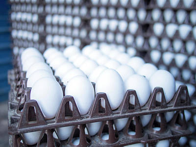 Eggs Get Stacked In Crates Art Print