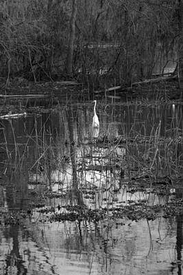 Photograph - Egret In Louisiana Atchafalaya Basin by Ronald Olivier