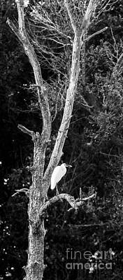 Photograph - Egret by Steven Ralser