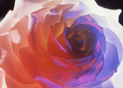 Photograph - Electric Rose  by Etti PALITZ