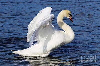 Painting - Elegant Mute Swan by Sue Harper