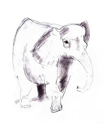 Animals Drawings - Elephant by Michal Boubin