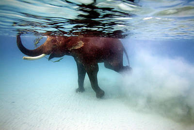 Photograph - Elephant Rajes Taking Swim In Sea by Johnny Haglund