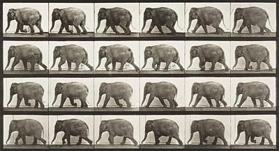 Usa Painting - Elephant Walking by Celestial Images