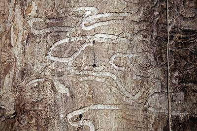 Emerald Ash Borer Tracks On Dead Tree Art Print by Jim West