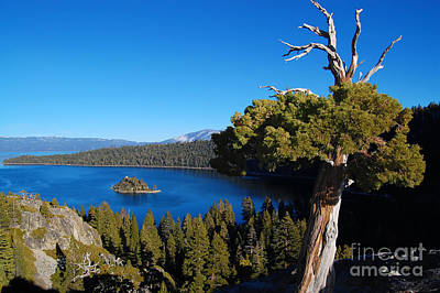 Photograph - Emerald Bay Reaching Tree by Debra Thompson