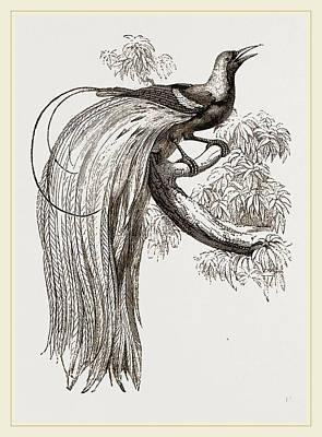 Emerald Bird Of Paradise Art Print