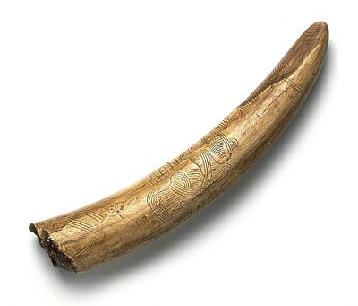 Engraved Mammoth Tusk Art Print by Science Photo Library