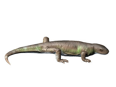 Martini Royalty-Free and Rights-Managed Images - Eocasea Is A Synapsid From The Late by Nobumichi Tamura