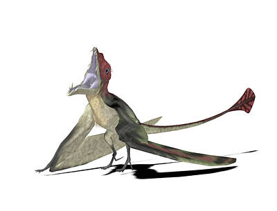 Triassic Photograph - Eudimorphodon Pterosaur by Friedrich Saurer