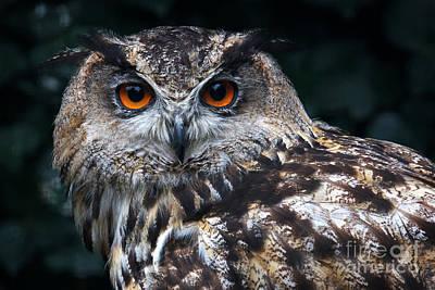 Soap Suds - European Eagle Owl by Nick  Biemans