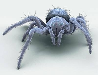Orb Weaver Spider Photograph - European Garden Spiderling by Steve Gschmeissner