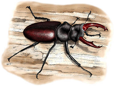 Photograph - European Stag Beetle by Roger Hall