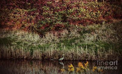 Photograph - Evening Stroll by Elizabeth Winter