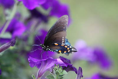 Photograph - Everything Is Purple 8 by  Kathy Cornett
