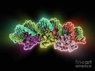 Integrated Photograph - Excisionase Complex With Dna by Laguna Design