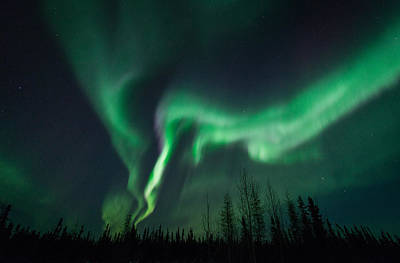 Photograph - Extreme Aurora by Roger Clifford