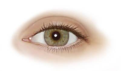 Photograph - Eye, Illustration by QA International