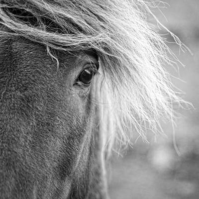 Photograph - Eye Of A Pony by Alexey Stiop