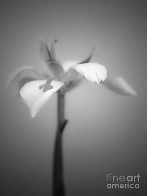 Photograph - Fairy Iris by Alexander Kunz